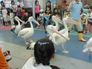鳥羽水族館で…